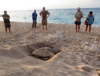AKUMAL, MEXICO, Place of the Sea Turtles by Caroline Arnold at The Intrepid Tourist