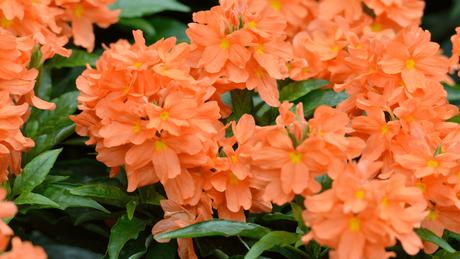 Bright, Beautiful Warm-Season Annuals for Your Central Florida Garden