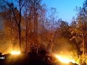 Experience with Forest Fires.