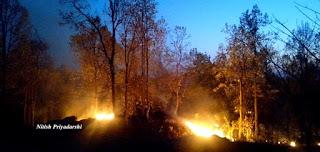 My experience with Forest Fires.