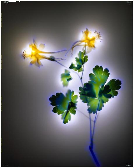 Robert Buelteman – Glowing Plant Photography