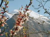 Left Heart Valleys Hunza