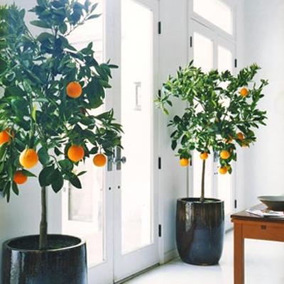 HOUSE PLANTS // Cheap Trick