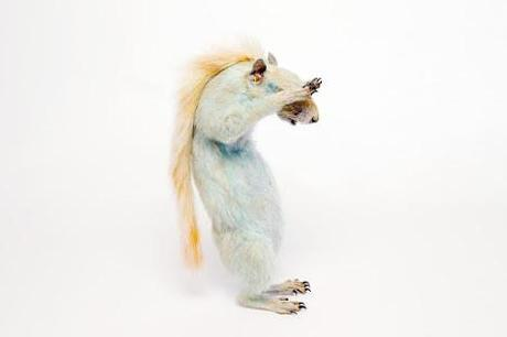 Harriet Horton's Taxidermy