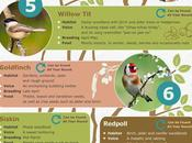 Woodland Birds Britain Infographic