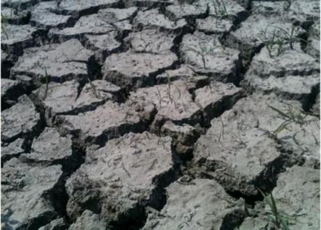 Scientists told Congress that recent droughts in the US were caused by mand-made global warming.