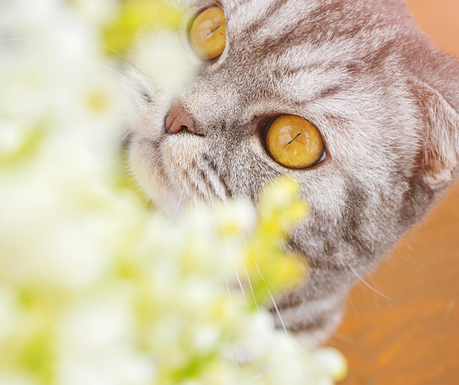 March is Pet Poison Awareness Month: Common pet toxins