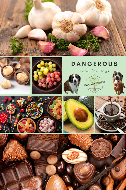 Common household items that are toxic to cats and dogs