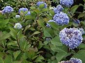 Shrubs Shade That Grow Well Zone