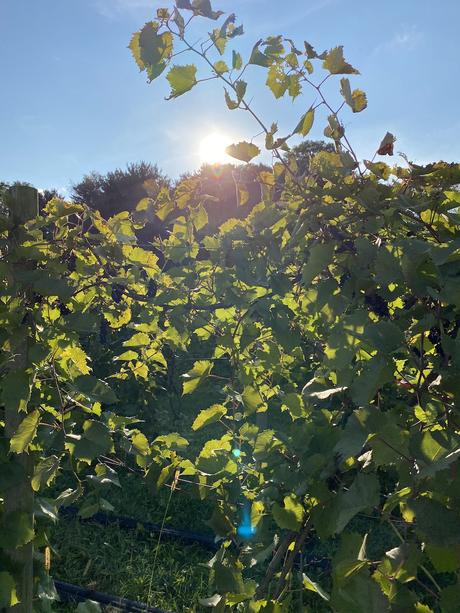 Anniversary Weekend at Gervasi Vineyard