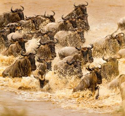 THE GREAT WILDEBEEST MIGRATION, TANZANIA by Owen Floody at The Intrepid Tourist