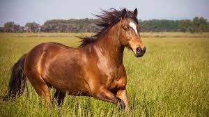 Equine CBD- How To Get The Best Benefits For Your Horse