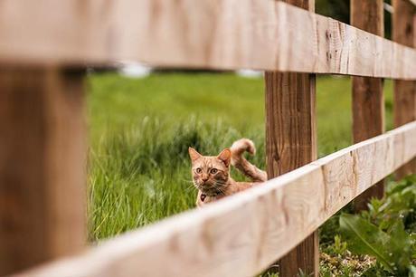 My favourite garden fence ideas
