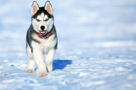 Top 10 Most Dangerous Dog Breeds in The World 2021