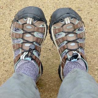 BACK YARD WILDLIFE, Guest Post by Karen Minkowski at The Intrepid Tourist