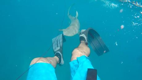 How to avoid reduce the probability of being killed by a shark