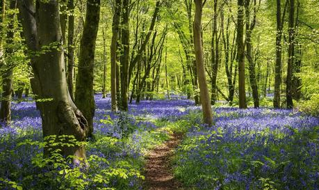 Only 7% of Britain's Native Woodlands are in a Good Condition