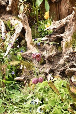 Arundel Castle gardens - a surprising hidden gem