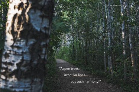Haiku 6