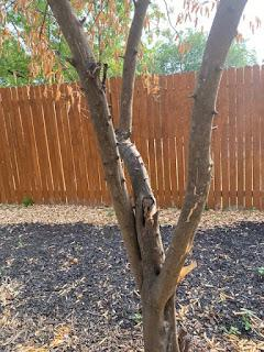 The Great Texas Freeze and What it Did to Your Citrus Trees