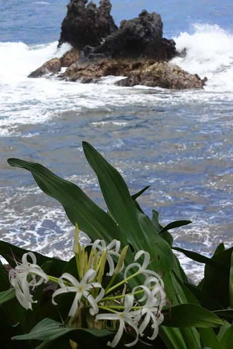 HAWAII TROPICAL BOTANICAL GARDEN:  Hilo, Hawaii by Caroline Arnold at The Intrepid Tourist
