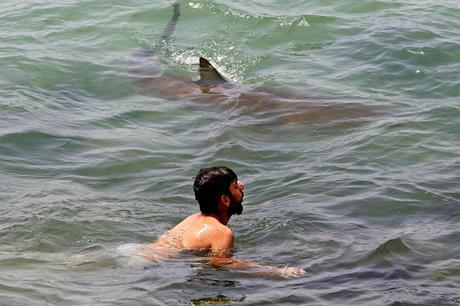 SHARK! GET OUT OF THE WATER!