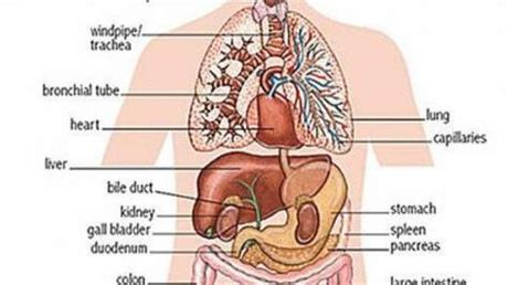 See related links to what you are looking for. Detailed Diagram Of The Urinary System | Human anatomy ...