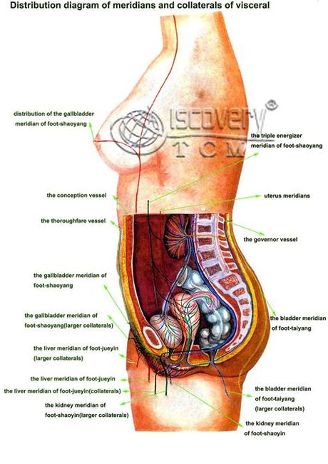 This diagram depicts human anatomy diagram of organs with parts and labels. Diagram Of Female Internal Organs | Body organs diagram ...