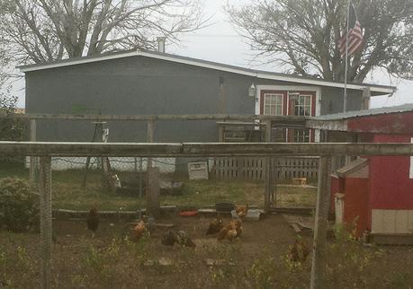 Fowl spectators at the Kansas Rails-to-Trails Fall Ultra Extravaganza