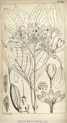 Herbarium: The Quest... (a book review & more)