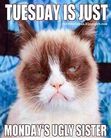 Funny tuesday quotes tuesday as any other day of the week can bring you both pleasant and unpleasant surprises. Happy & Funny Tuesday Quotes With Images, Pictures | Funny ...