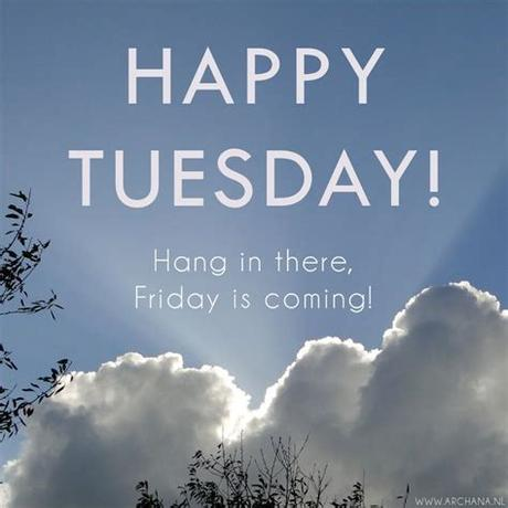 Light wednesday with the bulb you create on tuesday. Happy Tuesday Hang In There Pictures, Photos, and Images ...