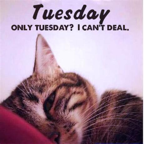 See more ideas about tuesday, tuesday quotes, tuesday humor. Funny Tuesday Quotes. QuotesGram