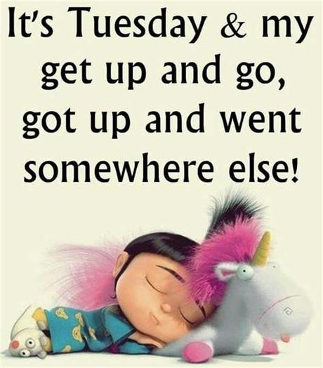 It's definitely heaps better than monday, and who doesn't enjoy taco tuesdays? 50+ Amazing Tuesday Morning Funny Quotes & Images