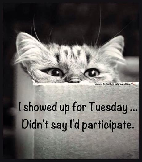 Do not even doubt that every tuesday funny message you share with your friends or colleagues will be much appreciated. Funny tuesday morning Memes