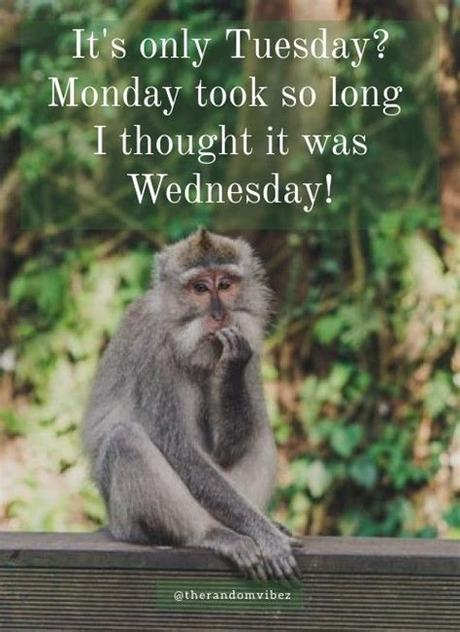Life is awesome so make sure to enjoy every minute of it with these 55 motivational and sometimes funny tuesday quotes. 100 Funny Tuesday Memes, Pictures & Images for Motivation ...