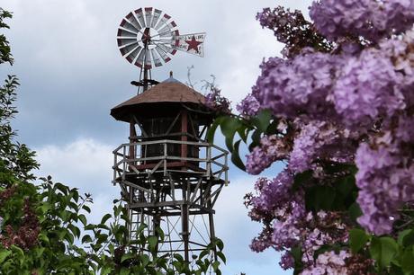 Lilac Days Hulda Klager Lilac Gardens