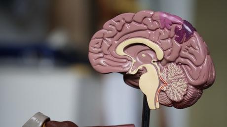 Brain Food: Boosting Brain Functions