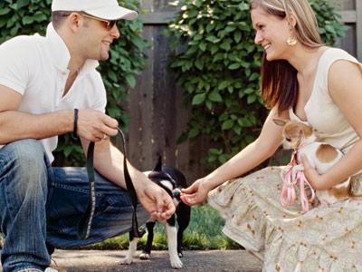 Your Dog May Be Your Best Matchmaker!