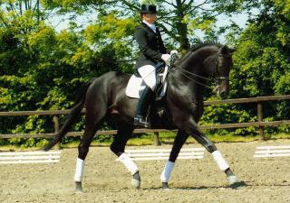 Dressage horse and rider: image via best-horse-photos.com