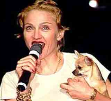 Madonna Tickets Fetch Record $100,000 to Help Dogs