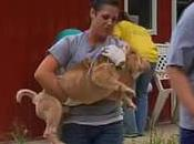 About Dogs Found Ohio Puppy Mill Kennel