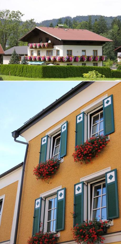 Austrian flower boxes