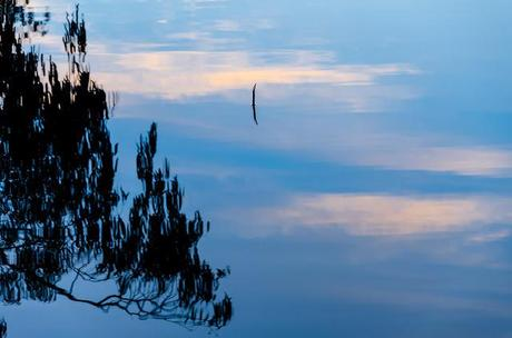 mirror reflection on water of glenelg river