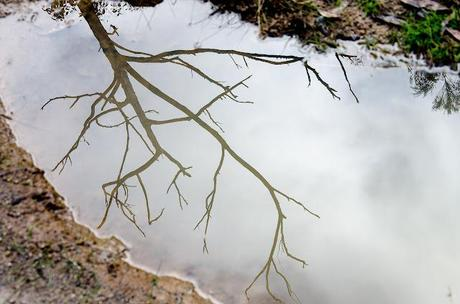reflection of tree in water on great south west walk