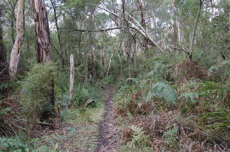 walking track at cobboboonee state forest on great south west walk