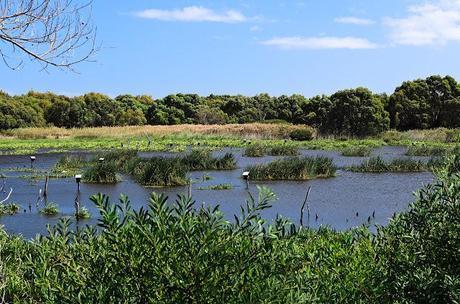 baxters wetland