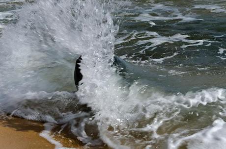 wave breaking over rock
