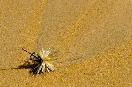 grass on baxters beach