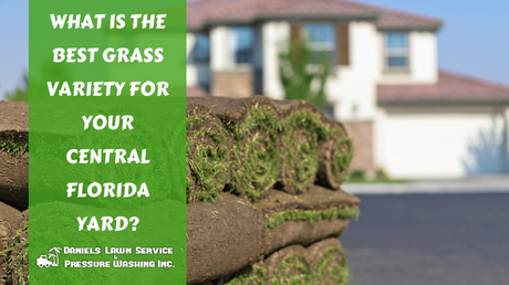 What is the Best Grass Variety for Your Central Florida Yard?